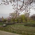 桜_公園 K147