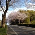 Photos: 桜_散歩 K163