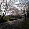 Photos: 桜_散歩 K162