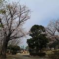 Photos: 桜_散歩道 D5392