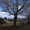 Photos: さくら公園 D5366