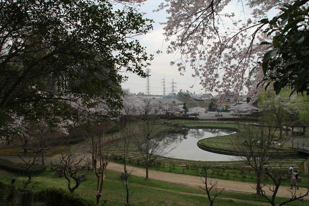 Photos: 桜_公園 D5419