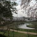桜_公園 D5419