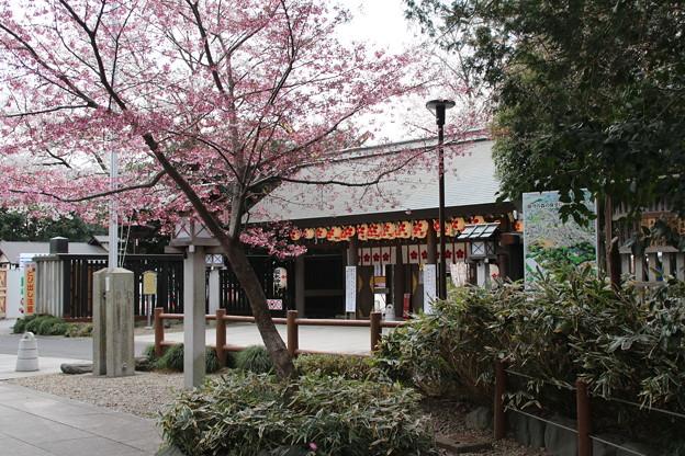 桜_神社 D5433