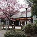 Photos: 桜_神社 D5433
