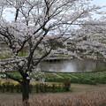 桜_四季の里 D5448