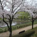 桜_四季の里 D5450