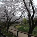 桜_四季の里 D5454