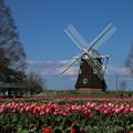 風車と_公園 D5528