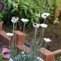 Photos: 花壇の花 D5572