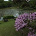 Photos: ツツジ_公園 F4119