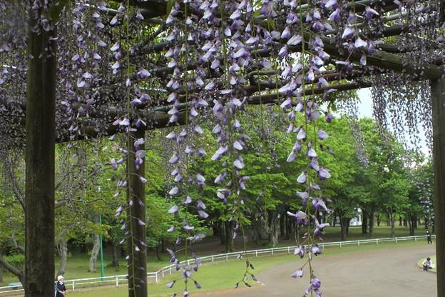 Photos: フジ_公園 F4137