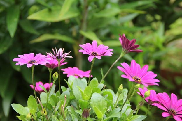 花壇の花 D5849