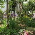 Photos: 花壇の花 D5854