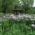 四季の里公園 D5949