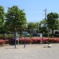 サツキ_公園 D6080