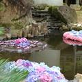 池の紫陽花_雨引 D6260