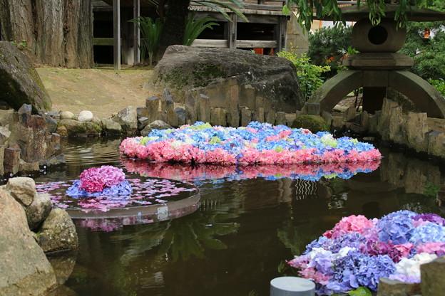 池の紫陽花_雨引 D6265