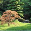 日本庭園_公園 D6410