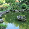 Photos: 日本庭園_公園 D6411