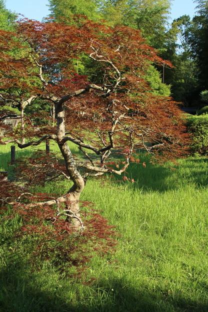 日本庭園_公園 D6412