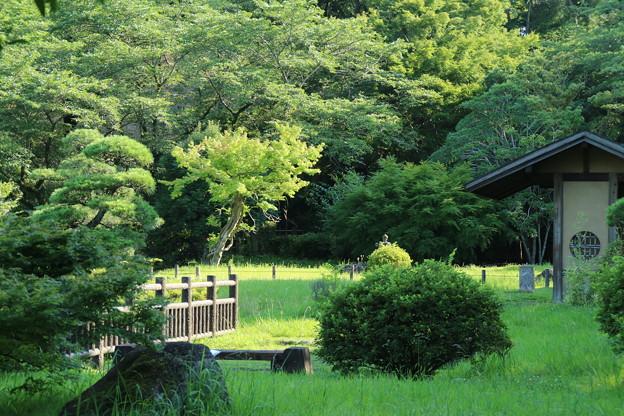 日本庭園_公園 D6414