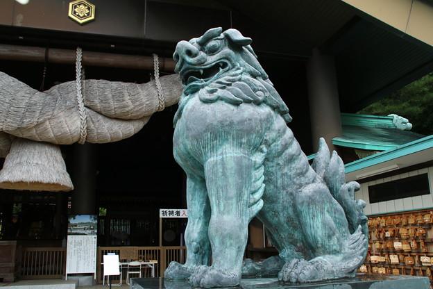 狛犬_出雲大社 D6428