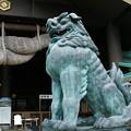 Photos: 狛犬_出雲大社 D6428