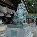 狛犬_出雲大社 D6431