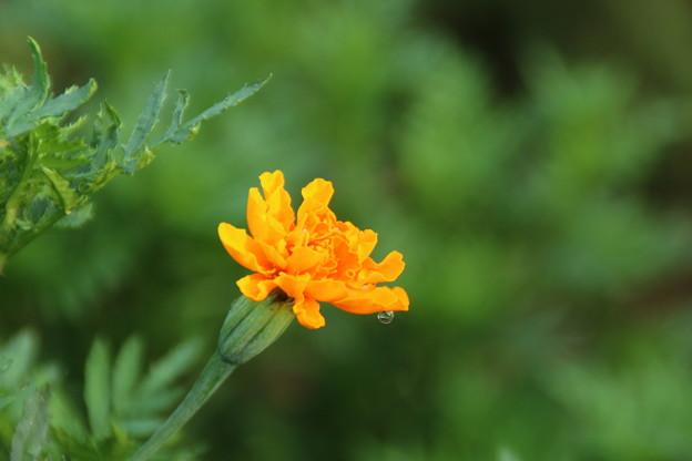 遊歩道の花 D6677