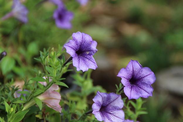 遊歩道の花 D6684