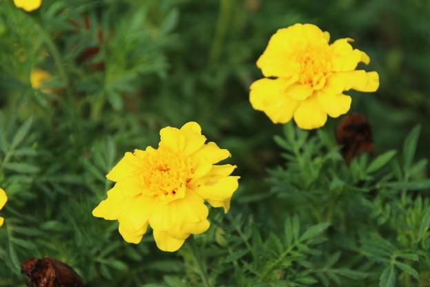 遊歩道の花 D6689