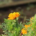 Photos: 遊歩道の花 D6703