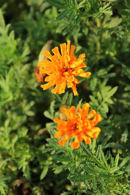 遊歩道の花 D6702