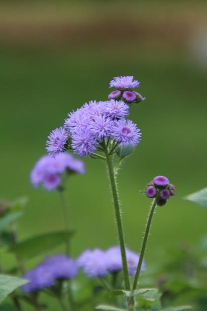 花壇の花_公園 D6805