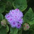 花壇の花_公園 D6806