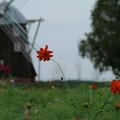 風車と_公園 D7005