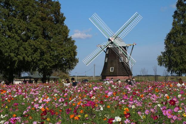 風車と_公園 D7088