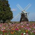 Photos: 風車と_公園 D7088