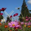風車と_公園 D7090