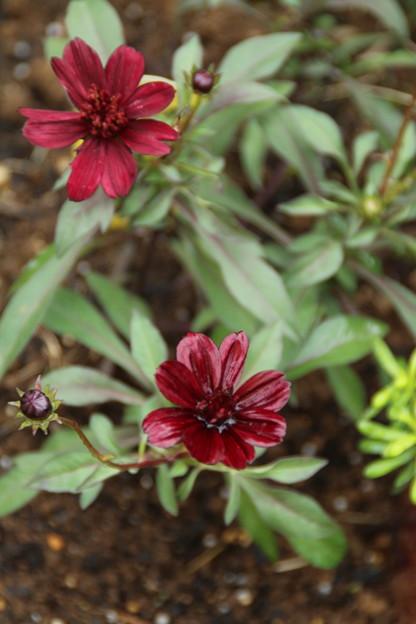 花壇の花 D7142
