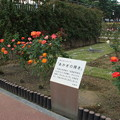 薔薇_前橋 D7287