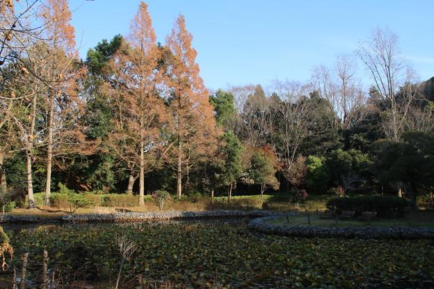 あけぼの山公園 D7383