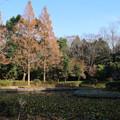 Photos: あけぼの山公園 D7383