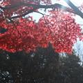 紅葉_公園 D7429