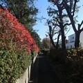 遊歩道の紅葉 D7422