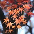 Photos: 紅葉_公園 D7439