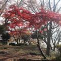 紅葉_天神山 D7457