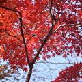 紅葉_天神山 D7458