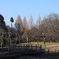 風景_公園 D7507